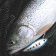 YSクランク(50㎜、8g)で初めて釣ったニジマス(35㎝) in川俣湖(2010/04/11)