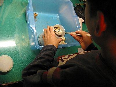 オオクワガタ幼虫・菌糸ビン交換(体重22グラム)