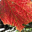 古賀志山の紅葉