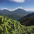 金精山頂のシャクナゲ