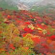 姥ガ平の紅葉(2013/10/6)