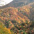 川俣地区の紅葉(2013/10/27)