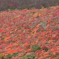 那須茶臼岳南面の紅葉(2015/10/04)