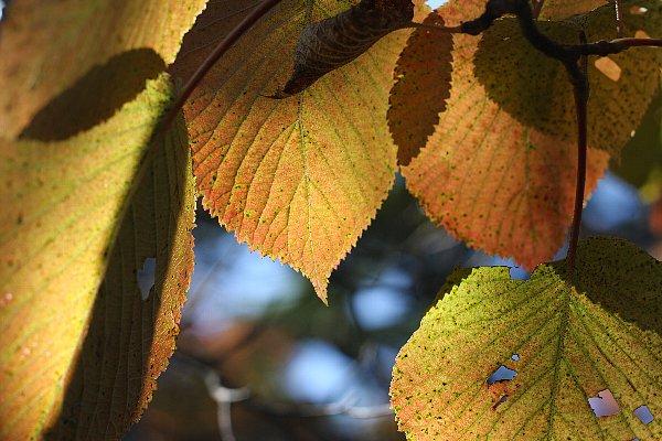 金精付近の紅葉