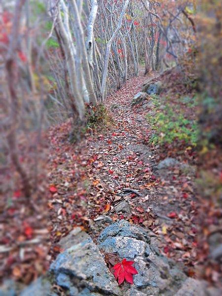 本山頂上付近の足元の紅葉