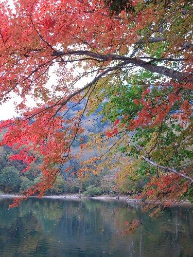 丸沼の紅葉(2015/10/10)