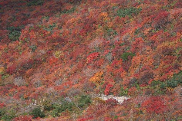 那須茶臼岳・姥ケ平の紅葉(2015/10/04)