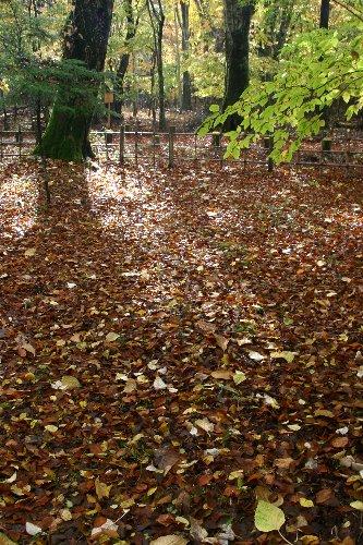 イタリア大使館付近の落葉