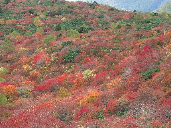 牛ケ首から見た姥ガ平の紅葉
