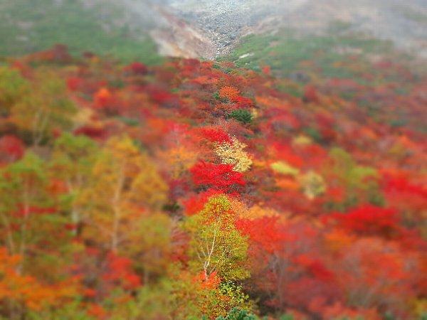 姥ガ平の紅葉