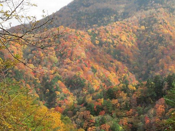 川俣地区の紅葉