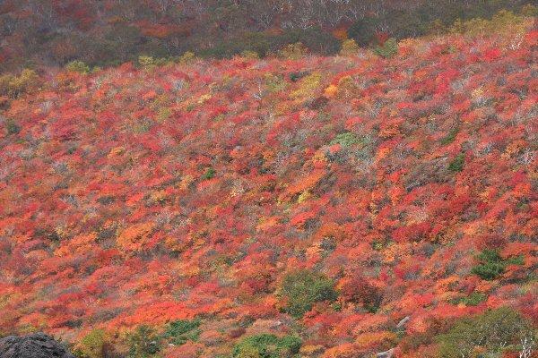 那須茶臼岳南面の紅葉