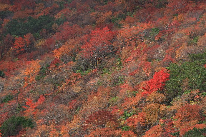 姥ケ平の紅葉