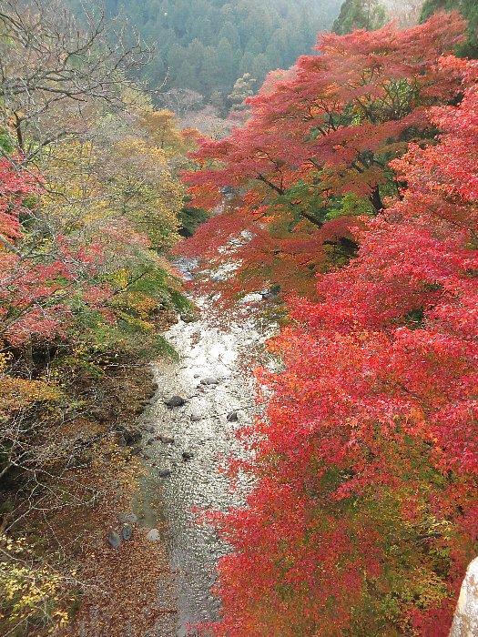 大芦渓谷(白井平橋)の紅葉