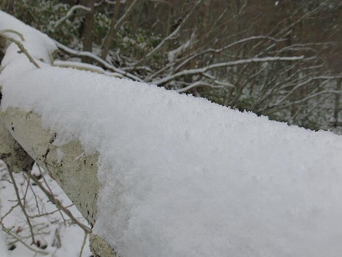 雪が積もった倒木