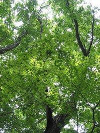 十里湖畔の林