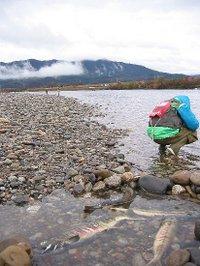 新潟県荒川(2009/12/12)