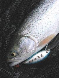YSクランク(50mm、8g)で初めて釣ったニジマス(35cm) in川俣湖(2010/04/11)