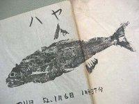 ハヤ(22.5cm)の魚拓