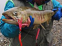 2009年12月の新潟県荒川、高1の長男が初めて釣ったサーモン