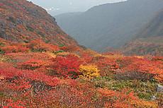 茶臼岳南側の紅葉
