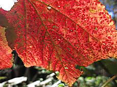 始まったばかり紅葉