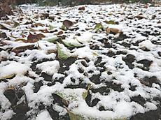 宇都宮の初雪