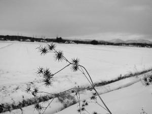 雪の鬼怒川