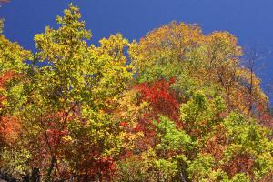瀬戸合峡の紅葉