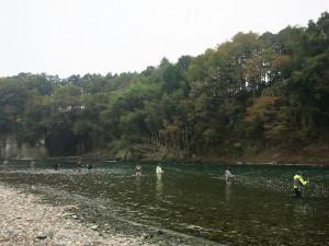2014年那珂川サケ有効利用調査の様子(2014/11/09)