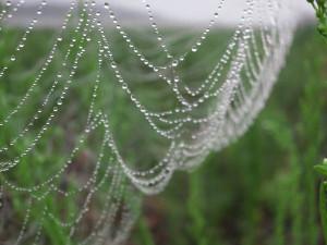 雨粒の付いた蜘蛛の巣