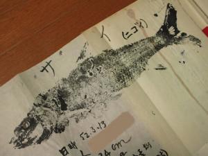 サイ(ニゴイ)の魚拓