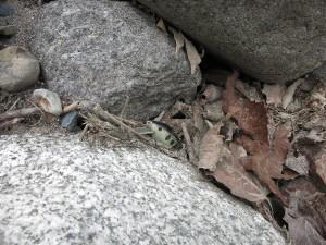 川俣湖でロストしたYSクランクを1ケ月ぶりに回収