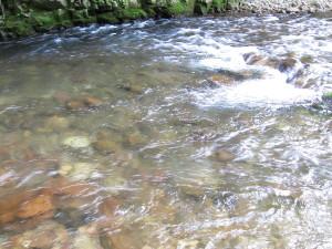 栗山釣り大会後の鬼怒川上流部の渓流(川俣地区)
