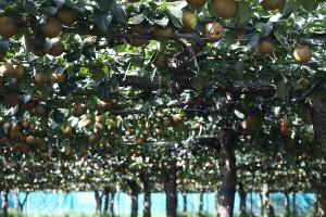 山口果樹園