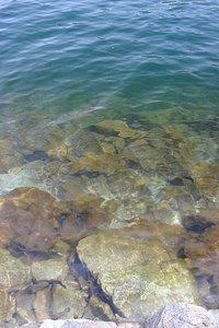 中禅寺湖のきれいな水