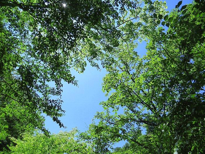 真夏の森林