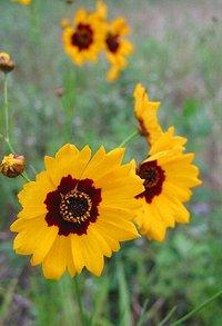 河原に咲いていた花
