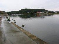 涸沼川(2009/10/3)