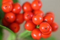 ナンテンの赤い果実