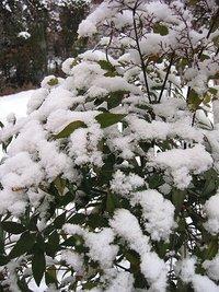 雪景色の庭