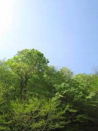 川俣湖の新緑