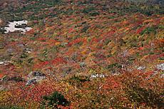 那須・姥ケ平の紅葉