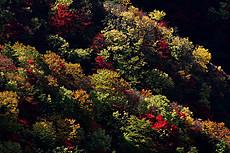 日光・半月山駐車場南側の紅葉