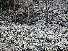 雪の金精峠付近