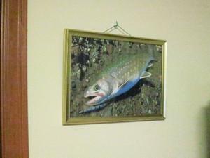 部屋の壁に飾っている額入りのイワナの写真